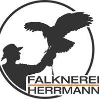 Falknerei Herrmann