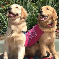 Dream Dogz - Central Florida Dog Training