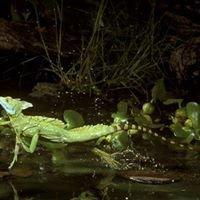 MCK Reptiles