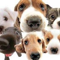 Pam's Southside Dog Walking, Pet Sitting & Doggie Daycare