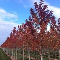 Clayton Tree Farm