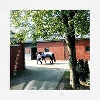 Tierklinik Hochmoor