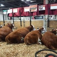 Hiddenview Registered Polled Herefords