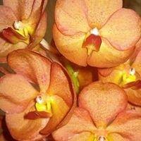 Orquídeas Chapecó
