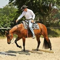 Felix Schnabel Pferdetraining