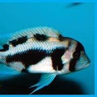AQUAlity Tropical Fish Wholesale, Inc.
