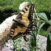 Hochzeitslocation Schmetterlingsgarten