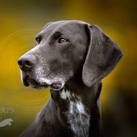 Craigmyle German Shorthaired Pointers