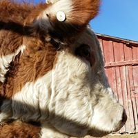 Melody Herefords
