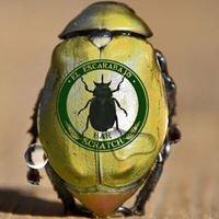 Escarabajo Scratch