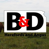B&D Herefords and Angus
