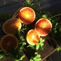 Frutta Dolce