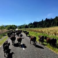 Mt Huia Farmstay