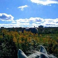 Peaceful Acres Horse Farm