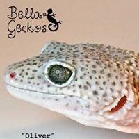 Bella Geckos