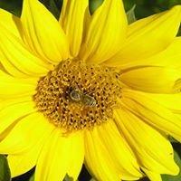 Čebelarstvo Mlakar