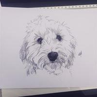 Rachel Moruzzi Pet Illustrations