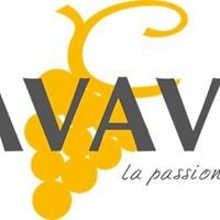 Cavavin Vernon