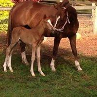 Boambee Equestrian Centre
