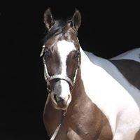 Corbin Paint & Quarter Horses