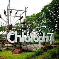Chlorophyll Green House Restaurant Patanakarn 53