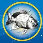 Риболовен магазин Fishingmall