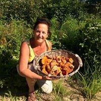 Les champignons du Lac-Édouard