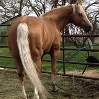 Overlook Farm Quarter Horses