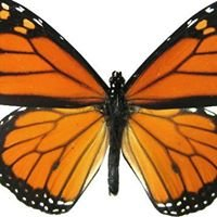 Monarch Therapy Services, Inc.