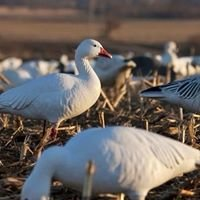 Limited Out Waterfowl
