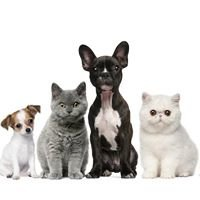 Cabinet Vétérinaire du Molage