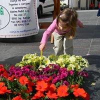 Cvetje na vasi