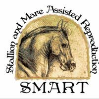 Stallion and Mares - Equine Assisted Reproduction at SAMs