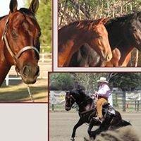 Robertson Horse Sales