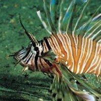 Albury Aquarium