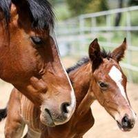 Glory Farm Trakehner Sport Performance Horses