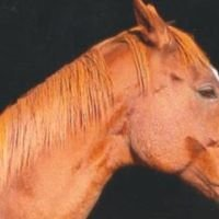 West Prussian Trakehner Sport Horse Breeding