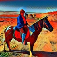 Horses4fun