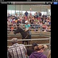 Echuca Horse Sales
