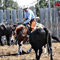 Gruenig Performance Horses
