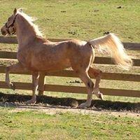 HICKORY RIDGE FARMS - ROCKY MOUNTAIN HORSES