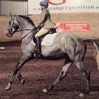 Honest Horse Sales