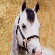 Quarter Horse Sale Barn