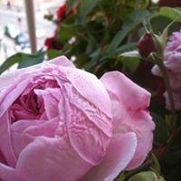 Rose des Arts