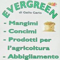 Evergreen di Carlo Gallo