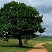 Camino Milenario