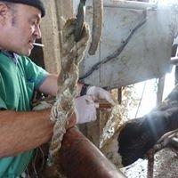 Sanchez J. Docteur Vétérinaire