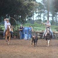 J2 Quarter Horse