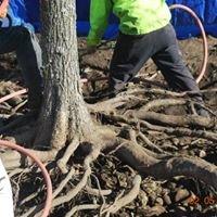 CTE Cascade Tree Experts, LLC