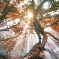 Wendy Turley Angel Guidance & Healing